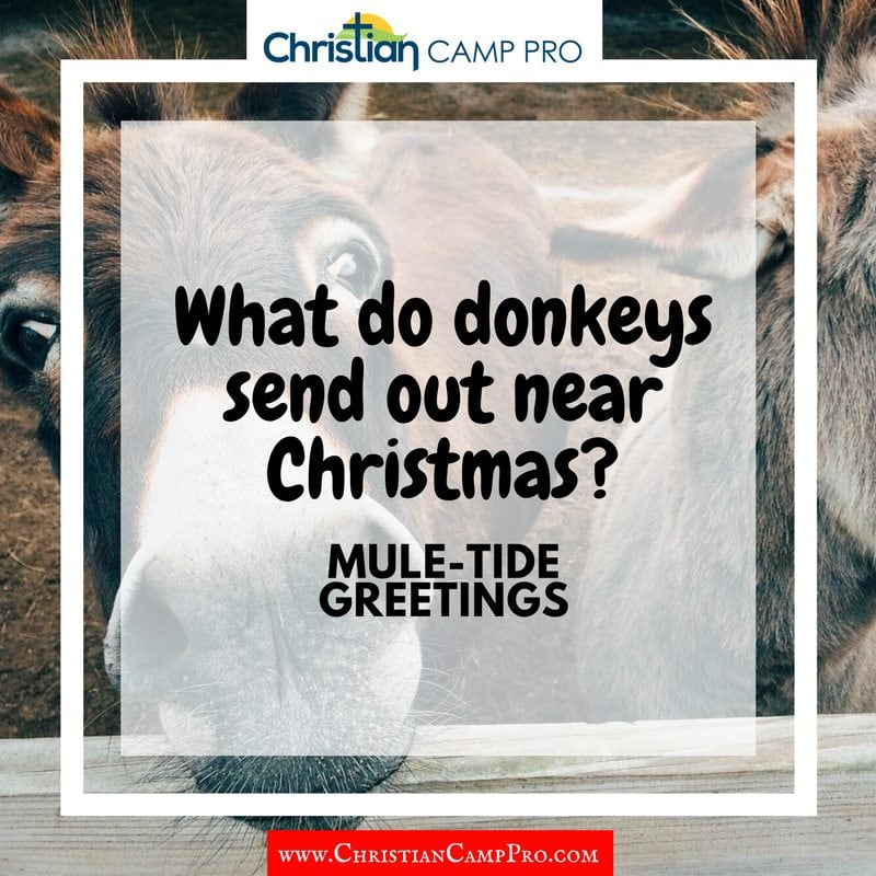 donkeys christmas muletide greetings